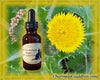 Nature's Remedies - Asiatic Hawksbeard Remedy/Essence
