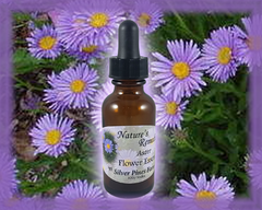 Aster Flower Essence - Nature's Remedies
