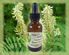 Astragalus Flower Essence - Nature's Remedies