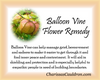 Balloon Vine Flower Essence