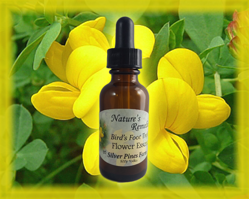 Bird's Foot Trefoil Flower Essence