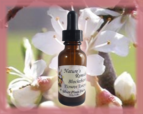 Blackthorn Flower Essence