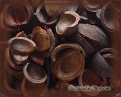 Hickory Nut Husks
