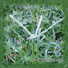 Crabgrass Flower Remedy