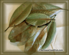Magnolia Leaves Dried (Magnolia Grandeflora)