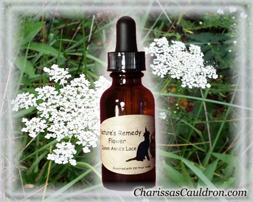 Nature's Remedies - Queen Anne's Lace Flower Remedy/Essence