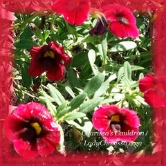 Red Calibrachoa Flower Remedy
