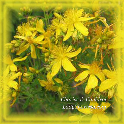 St. John's Wort Flower Essence Dosage Bottle