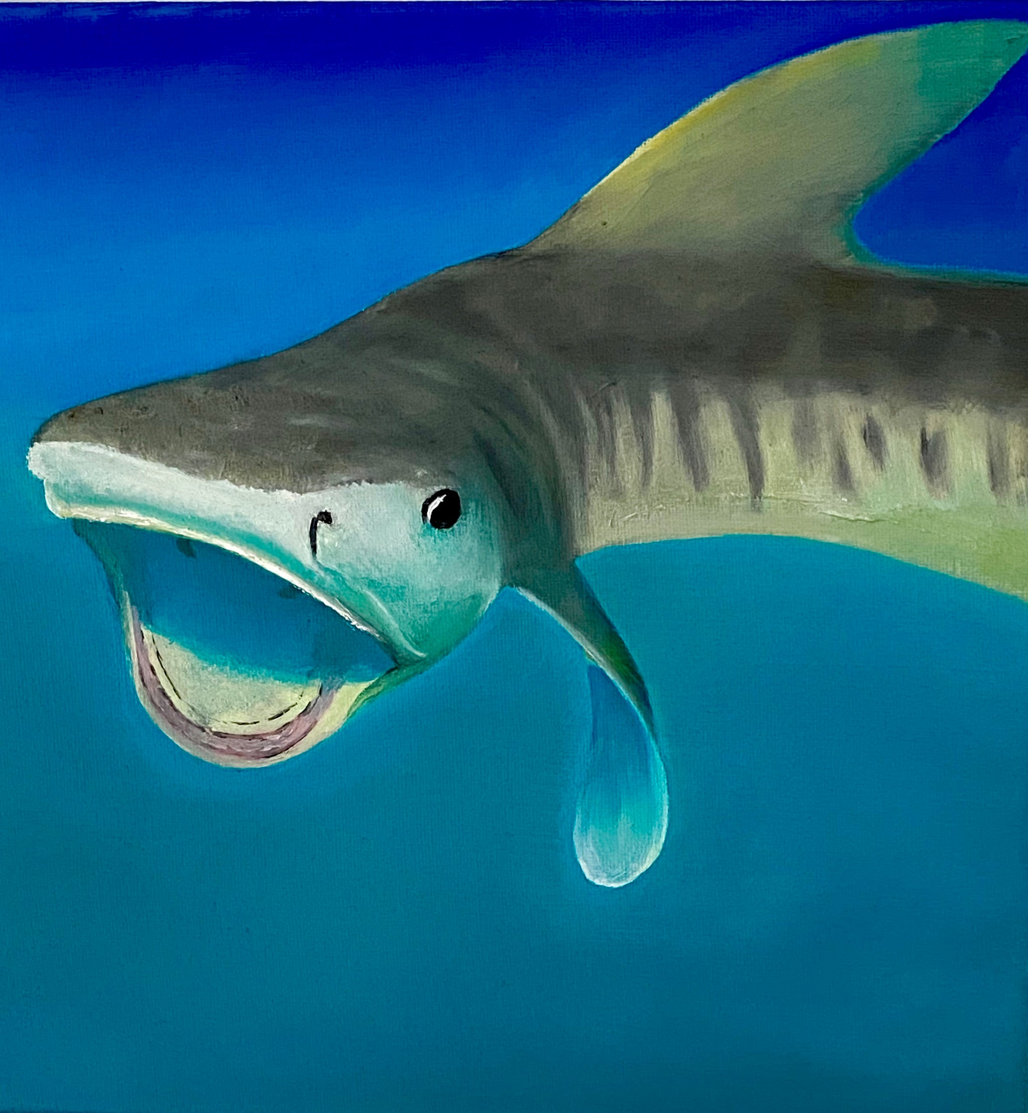 juvenile tiger shark oil painting by Delphine Pontvieux