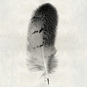 Feather #7 - Owl