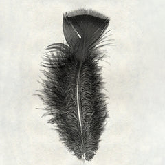 Feather #10 - Turkey