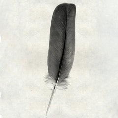 Feather #4 - Dove