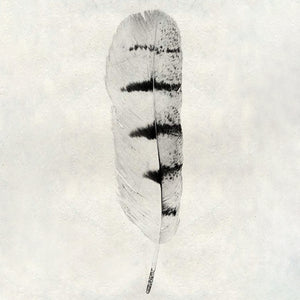 Feather #8 - Hawk
