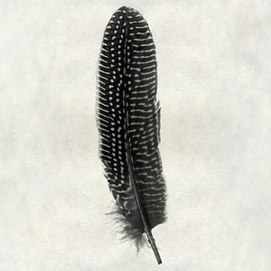 Feather #5 - Pheasant
