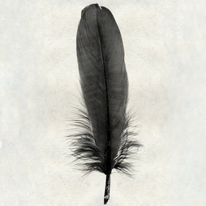Feather #6 - Goose