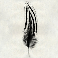 Feather #2 - Silver Pheasant