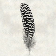 Feather #13 - Mottled Peacock