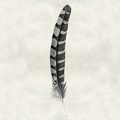 Feather #12 - Partridge