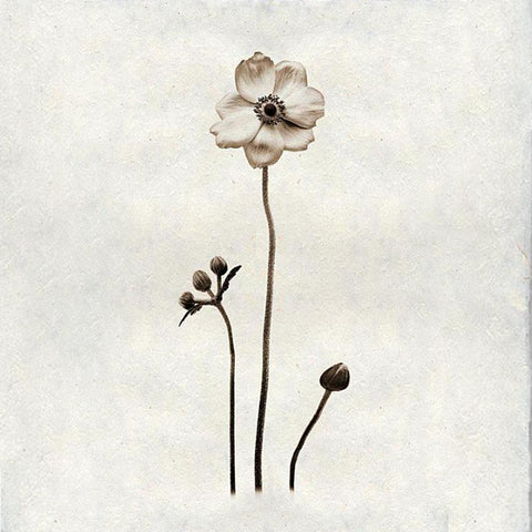 .Cream Flower Print on Handmade Paper