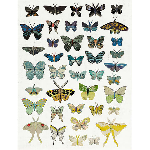 .Multi Colored Print - Dusk Butterflies
