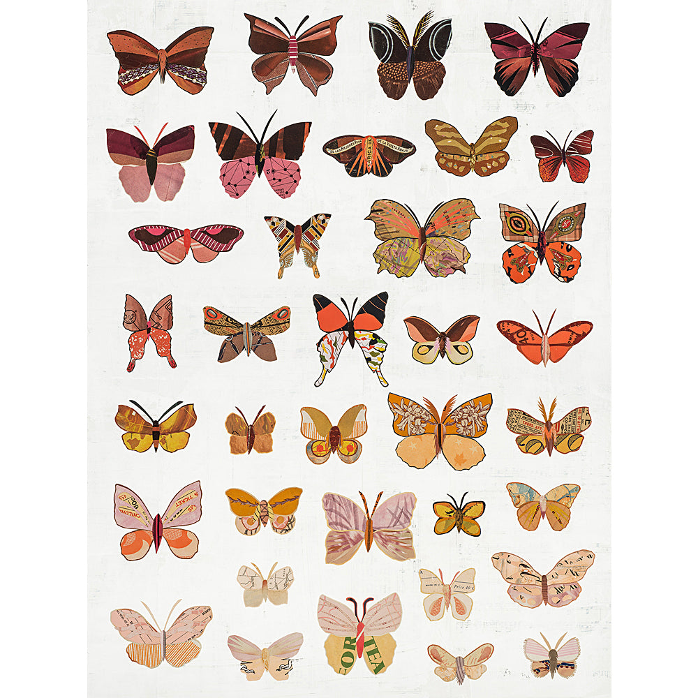 Multi Colored Print - Dawn Butterflies