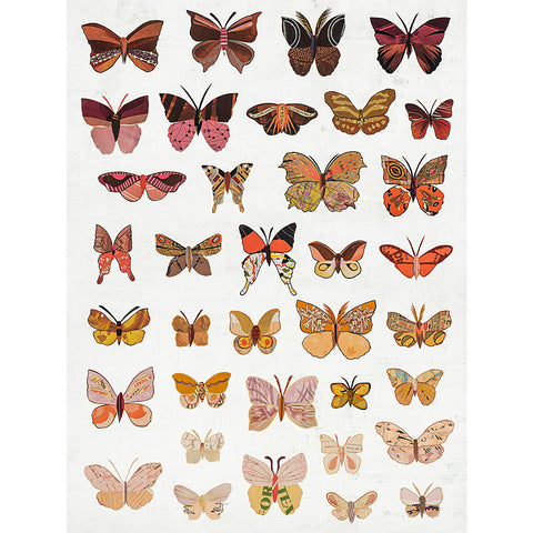 .Multi Colored Print - Dawn Butterflies
