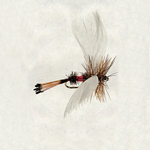 Cream Fly Fishing Hook Print on Handmade Paper