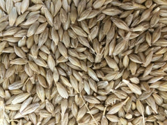 Robust Barley