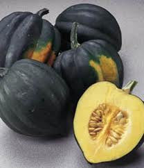 Table King Acorn (Cucurbita pepo)