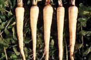 Parsnip-Andover