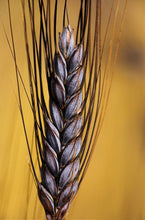 Load image into Gallery viewer, Utrecht Blue Wheat