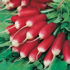 French Breakfast Radish (Raphanus sativus)