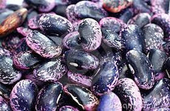 Scarlet Runner Beans (Phaseolus coccineus)