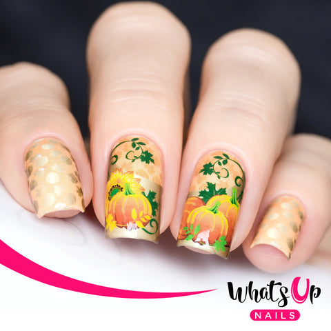 Whats Up Nails - P034 Pumpkin Deluxe Water Decals