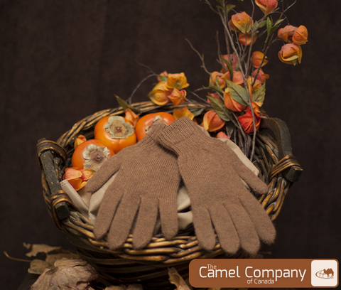 Camel Heal Gloves