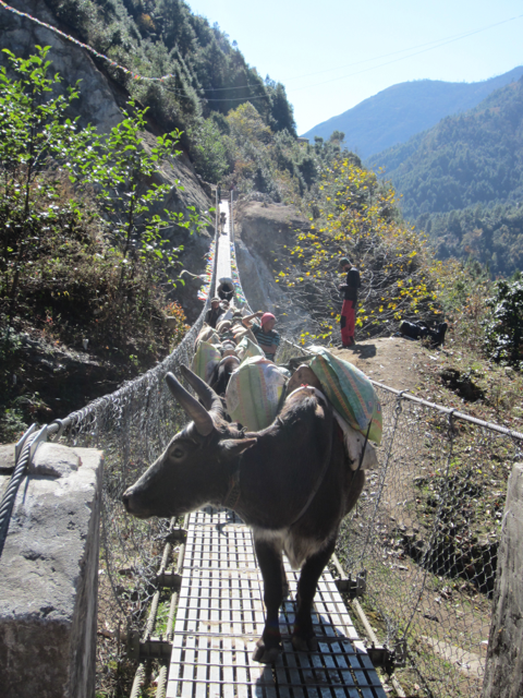 Yak carrying two sacks of rice blocking the entrance to a suspension bridge