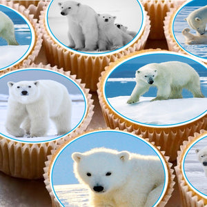 24 Cake Toppers 4cm On Icing cupcake images - ND1 cute polar bears xmas animals