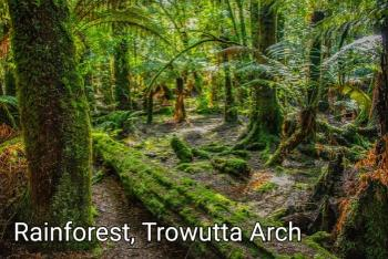 CPls08 Truwatta Arch Rainforest - Camhanaich Photography - Find Your Feet Australia Hobart Launceston Tasmania