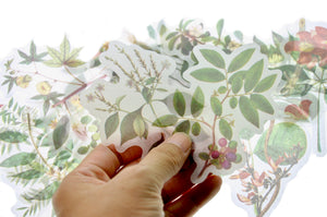 Translucent Stickers Set | Plants - Sticker - Backtozero