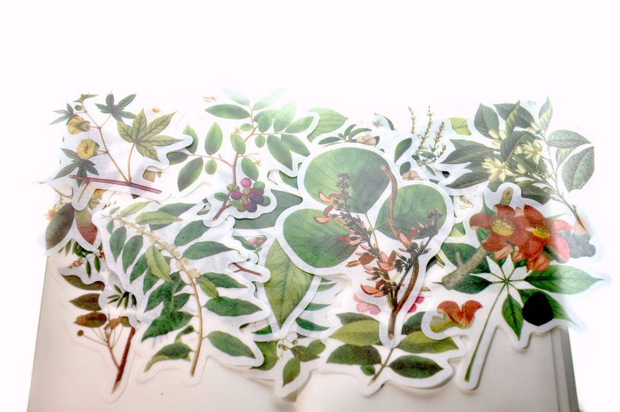 Translucent Stickers Set | Plants