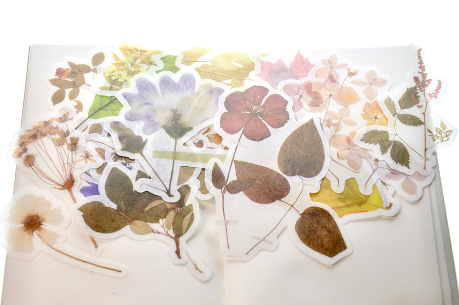 Translucent Stickers Set | Pressed Flowers & Leaf - Sticker - Backtozero