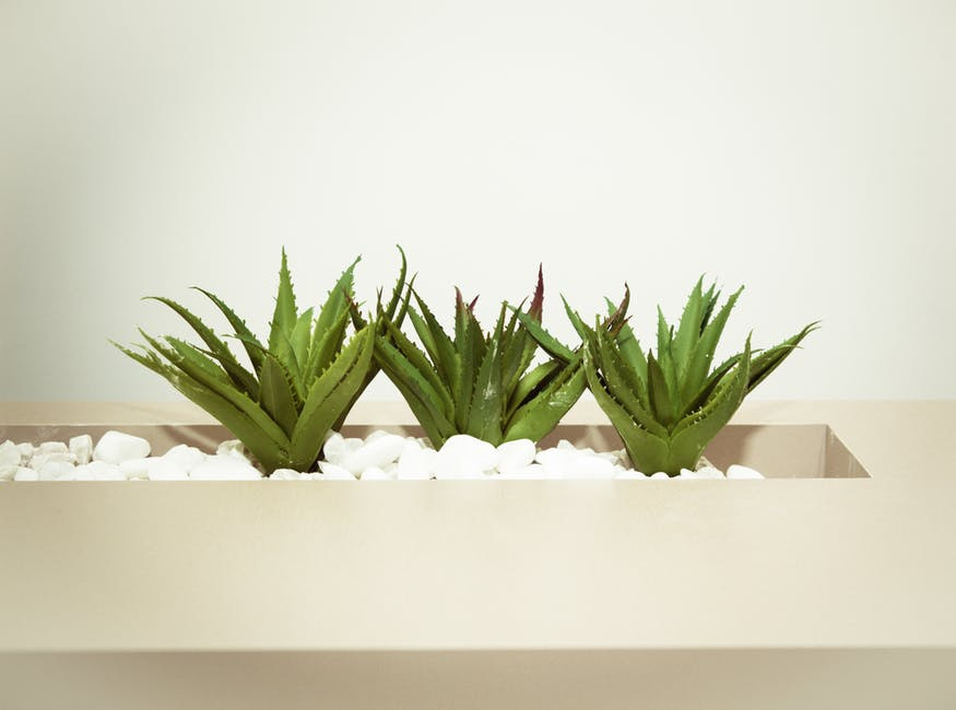 The Beauty Benefits of Aloe Vera