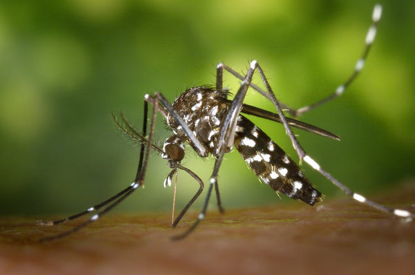 The dangers of mosquito bites and how to treat them