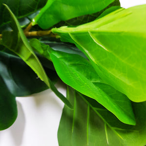 Rich Green Leafy Tropical Plant - Small Tree