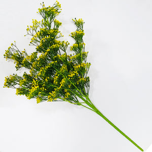 Seedy Bushy Plant - Yellow