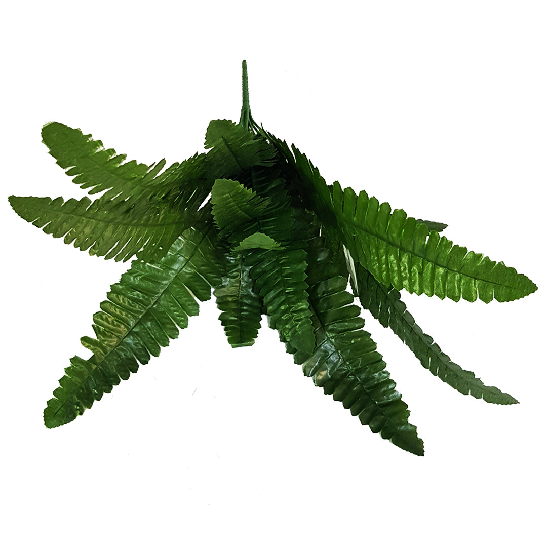 Tropical Plants - Small Fern