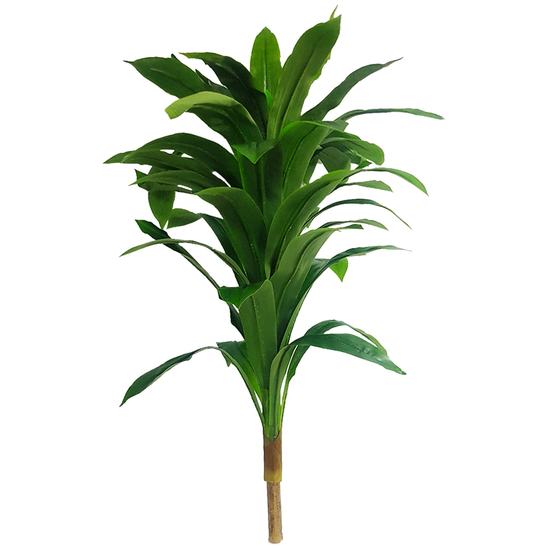 Tropical Plants - Small Tree