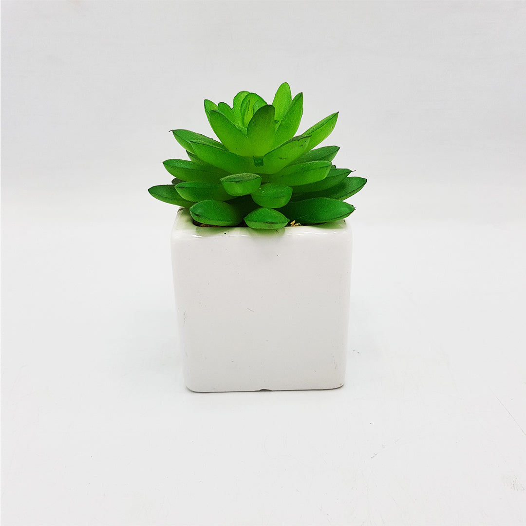Small Succulent in White Square Vase
