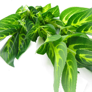 Tropical Plants - Tropical Green & White Plant