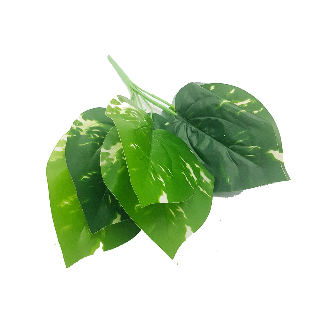 Tropical Plants - Dieffenbachia aka Dumb Cane Bunch